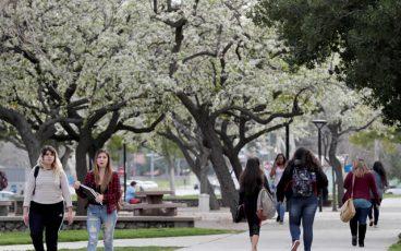 CSUSB Trees