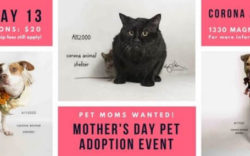 Corona Mothers Day Pet Adoption