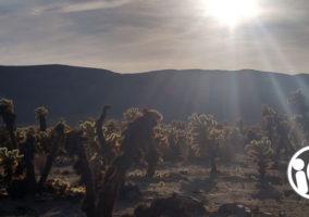 Joshua Tree California - National Park