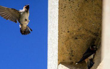 Moreno Valley College Swallows