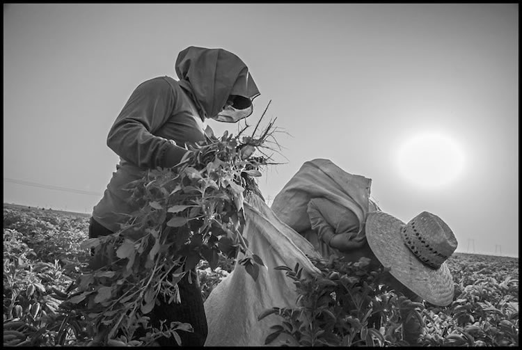 Trabajamos/We Work: In the Fields of the North | Photographs by David Bacon