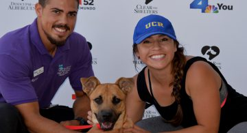 Riverside County Pet Adoption
