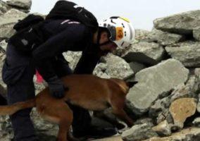 Riverside Rescue Dogs