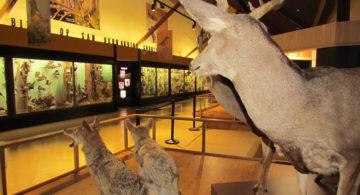 San Bernardino County Museum Hall of Diversity