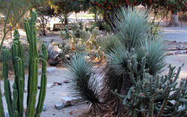 San Bernardino County Museum Desert Garden