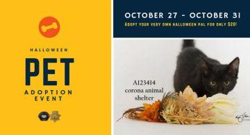 Corona Pet Adoption Event