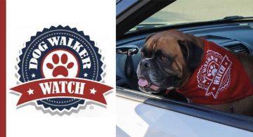 Corona Dog Walker Watch