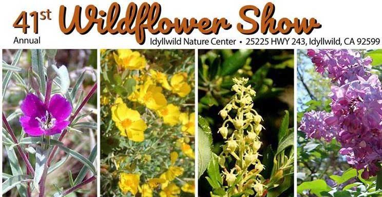 Idywild Flowers