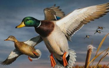 SB Wildlife Duck Stamp
